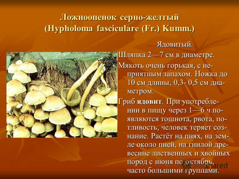 Ложноопенок серно-желтый (Hypholoma fasciculare (Fr.) Kumm.) Ядовитый. Шляпка 27 см в диаметре. Мякоть очень горькая, с не- приятным запахом. Ножка до 10 см длины, 0,3- 0,5 см диа- метром. Гриб ядовит. При употребле- нии в пищу через 16 ч по- являютс
