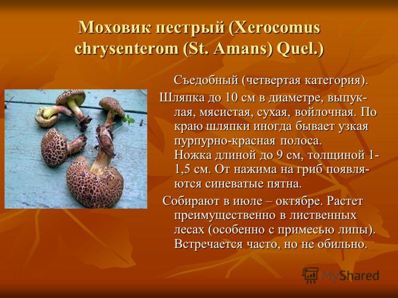Моховик пестрый (Xerocomus chrysenterom (St. Amans) Quel.) Съедобный (четвертая категория). Шляпка до 10 см в диаметре, выпук- лая, мясистая, сухая, войлочная. По краю шляпки иногда бывает узкая пурпурно-красная полоса. Ножка длиной до 9 см, толщиной