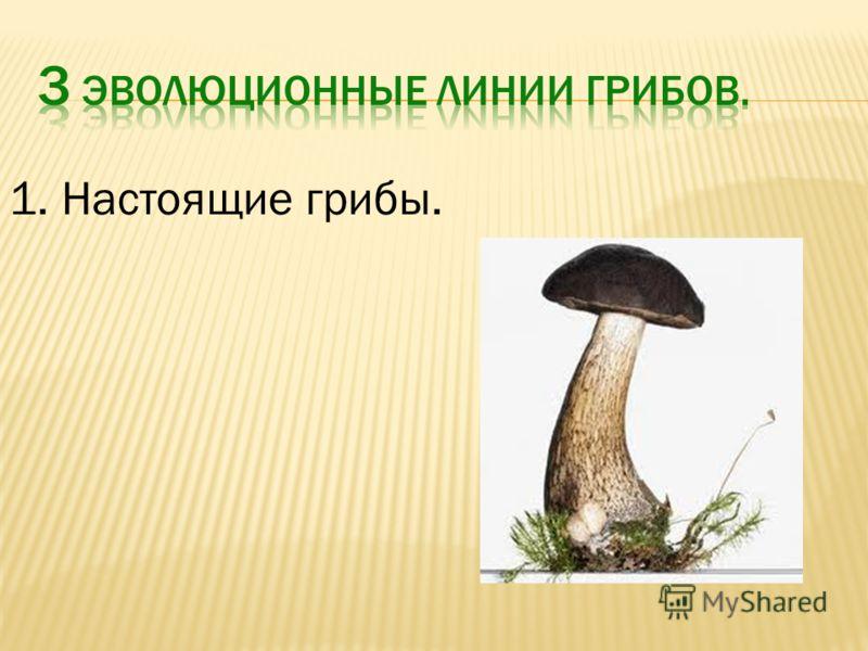 1. Настоящие грибы.