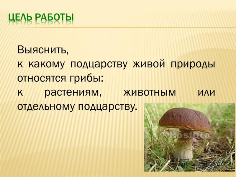 Выяснить, к какому подцарству живой природы относятся грибы: к растениям, животным или отдельному подцарству.