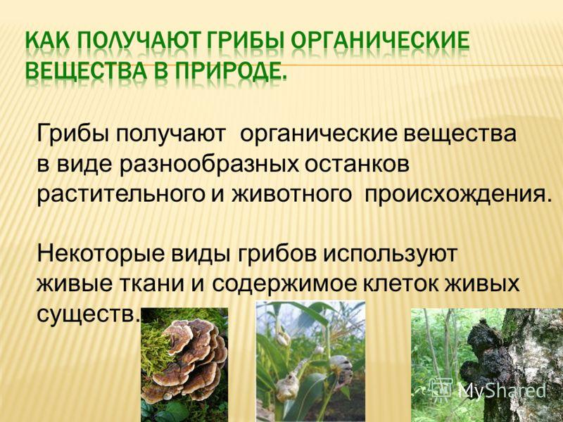 Грибы получают органические вещества в виде разнообразных останков растительного и животного происхождения. Некоторые виды грибов используют живые ткани и содержимое клеток живых существ.