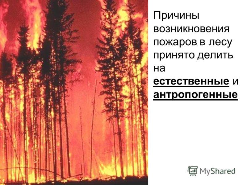 Причины возникновения пожаров в лесу принято делить на естественные и антропогенные