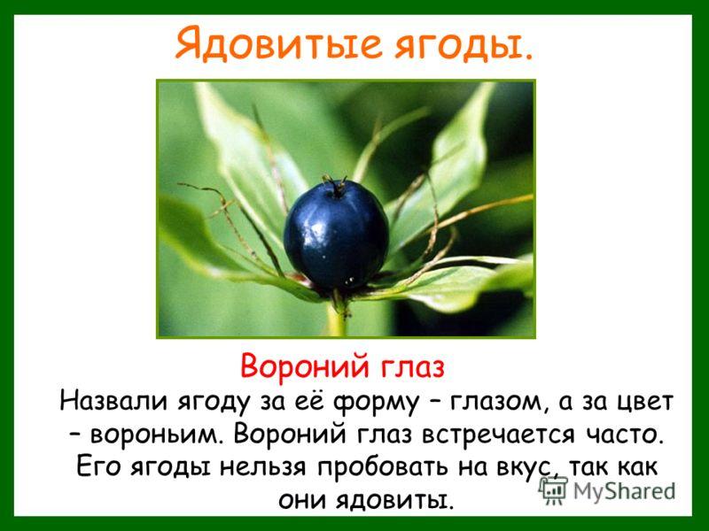 Ядовитые ягоды. Назвали ягоду за её форму – глазом, а за цвет – вороньим. Вороний глаз встречается часто. Его ягоды нельзя пробовать на вкус, так как они ядовиты. Вороний глаз