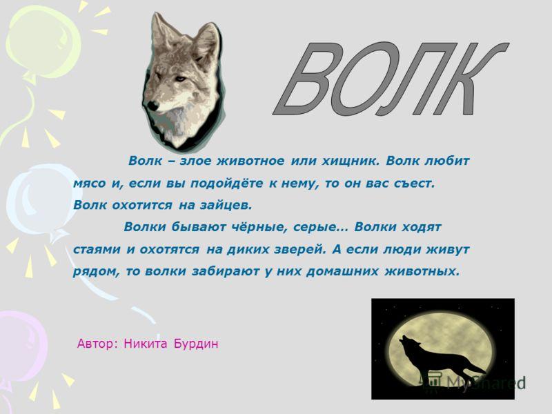 Волк – злое животное или хищник. Волк любит мясо и, если вы подойдёте к нему, то он вас съест. Волк охотится на зайцев. Волки бывают чёрные, серые… Волки ходят стаями и охотятся на диких зверей. А если люди живут рядом, то волки забирают у них домашн