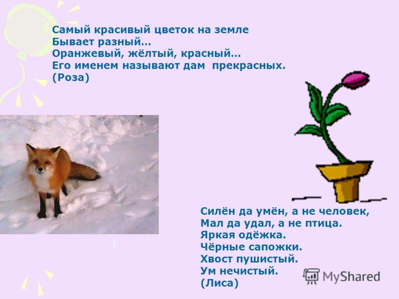 Самый красивый цветок на земле Бывает разный… Оранжевый, жёлтый, красный… Его именем называют дам прекрасных. (Роза) Силён да умён, а не человек, Мал да удал, а не птица. Яркая одёжка. Чёрные сапожки. Хвост пушистый. Ум нечистый. (Лиса)