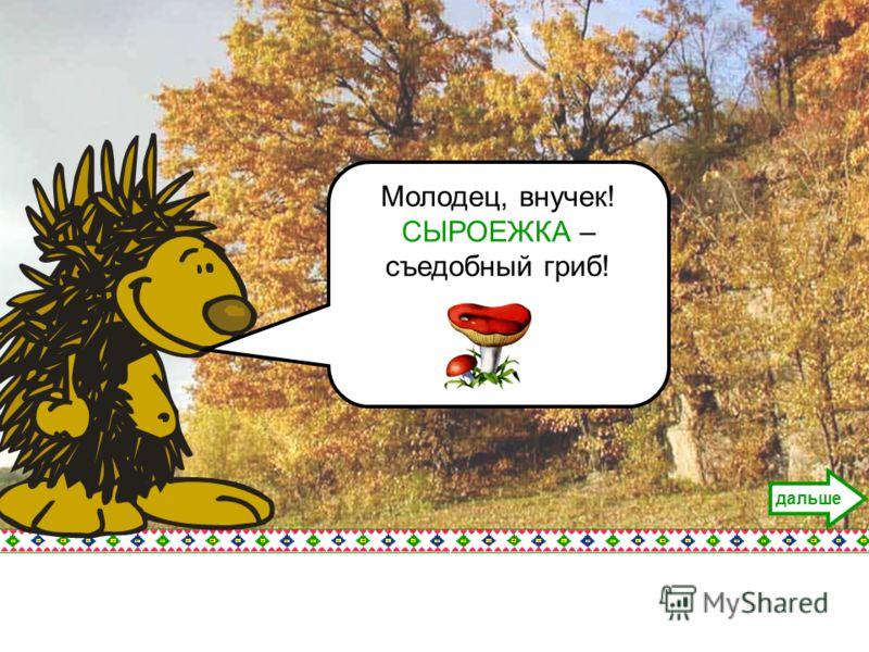 Молодец, внучек! СЫРОЕЖКА – съедобный гриб! дальше