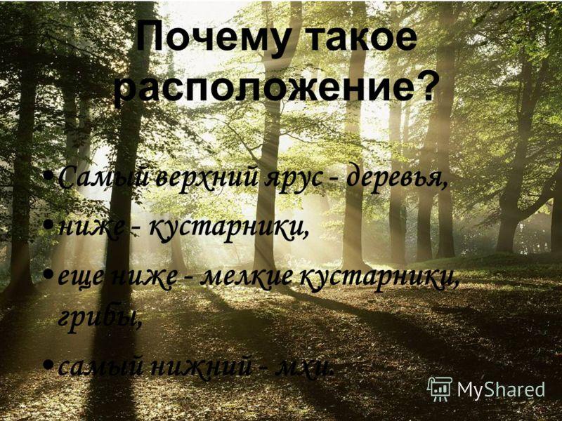 Почему такое расположение? Самый верхний ярус - деревья, ниже - кустарники, еще ниже - мелкие кустарники, грибы, самый нижний - мхи.