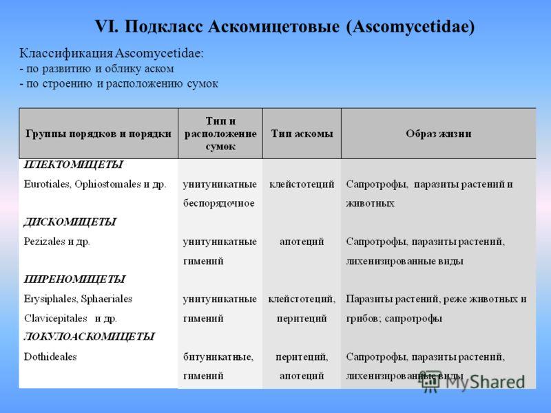 VI. Подкласс Аскомицетовые (Ascomycetidae) Классификация Ascomycetidae: - по развитию и облику аском - по строению и расположению сумок