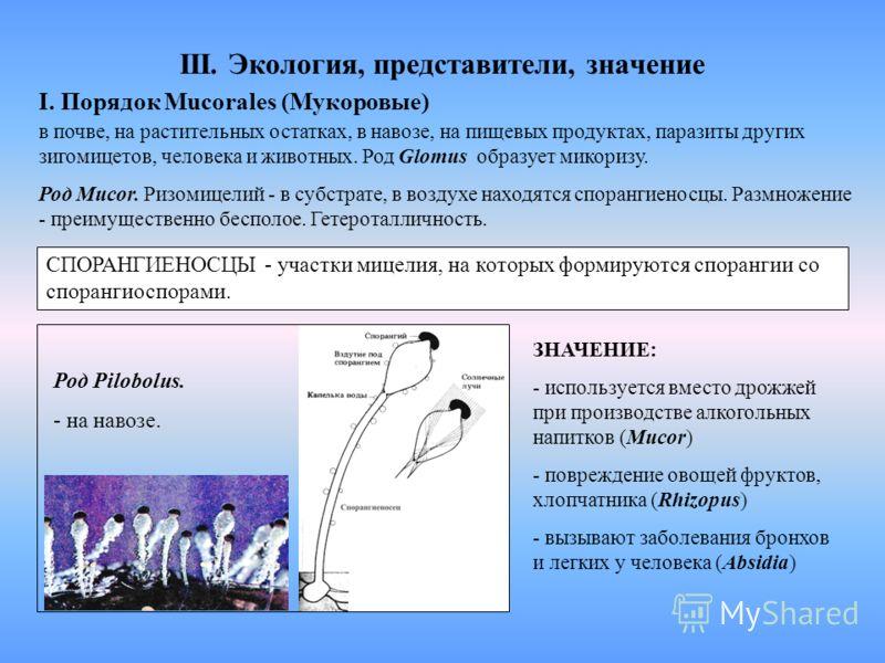 III. Экология, представители, значение I. Порядок Mucorales (Мукоровые) в почве, на растительных остатках, в навозе, на пищевых продуктах, паразиты других зигомицетов, человека и животных. Род Glomus образует микоризу. Род Mucor. Ризомицелий - в субс