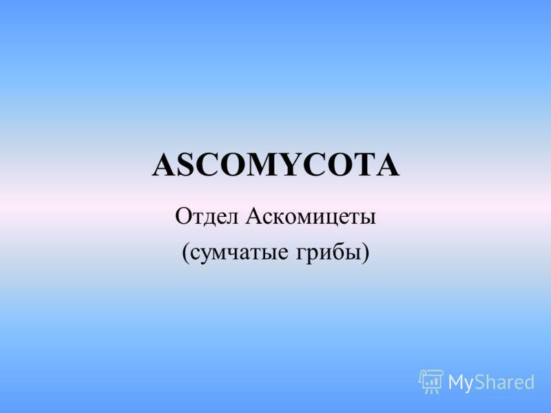 ASCOMYCOTA Отдел Аскомицеты (сумчатые грибы)