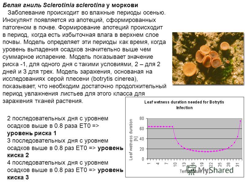 Белая гниль Sclerotinia sclerotina у моркови Заболевание происходит во влажные периоды осенью. Инокулянт появляется из апотеций, сформированных патогеном в почве. Формирование апотеций происходит в период, когда есть избыточная влага в верхнем слое п