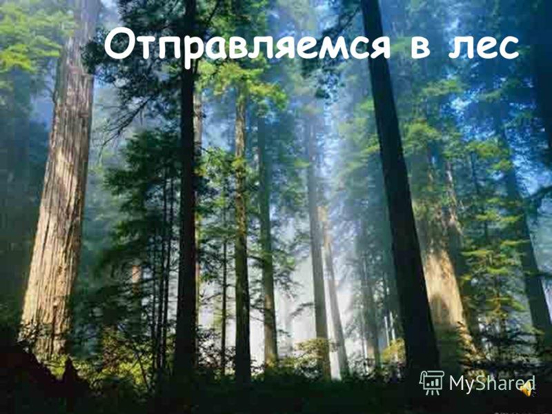 Что это Под сосною у дорожки Кто стоит среди травы? Ножка есть, но нет сапожек, Шляпка есть, нет головы.