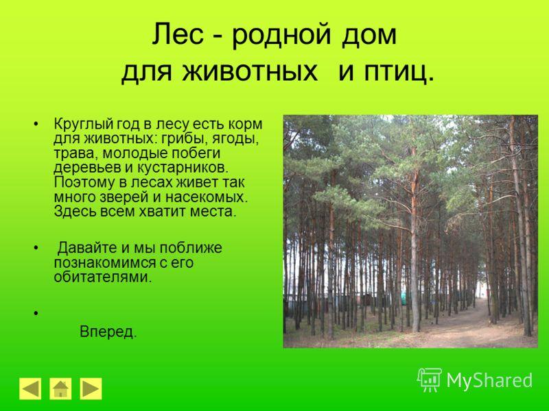 Лес-источник вдохновения! Вот как описывает лес замечательный писатель К.Г.Паустовский: «Кто испытал тот знает, как легко дышится в прогретых солнцем лесах! Настоящая сказка ждет человека там. Все к чему прикоснешься, - сухое и теплое. Великая сила ж