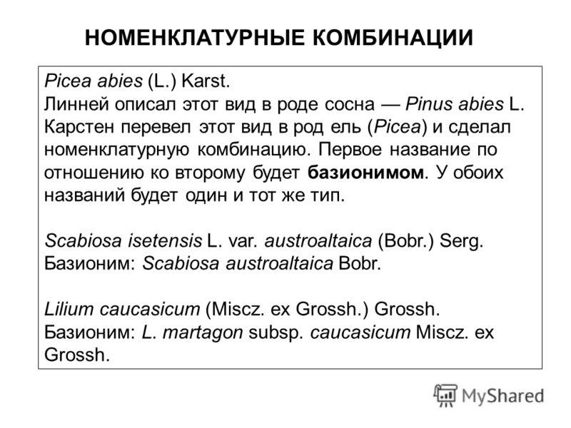 НОМЕНКЛАТУРНЫЕ КОМБИНАЦИИ Picea abies (L.) Karst. Линней описал этот вид в роде сосна Pinus abies L. Карстен перевел этот вид в род ель (Picea) и сделал номенклатурную комбинацию. Первое название по отношению ко второму будет базионимом. У обоих назв