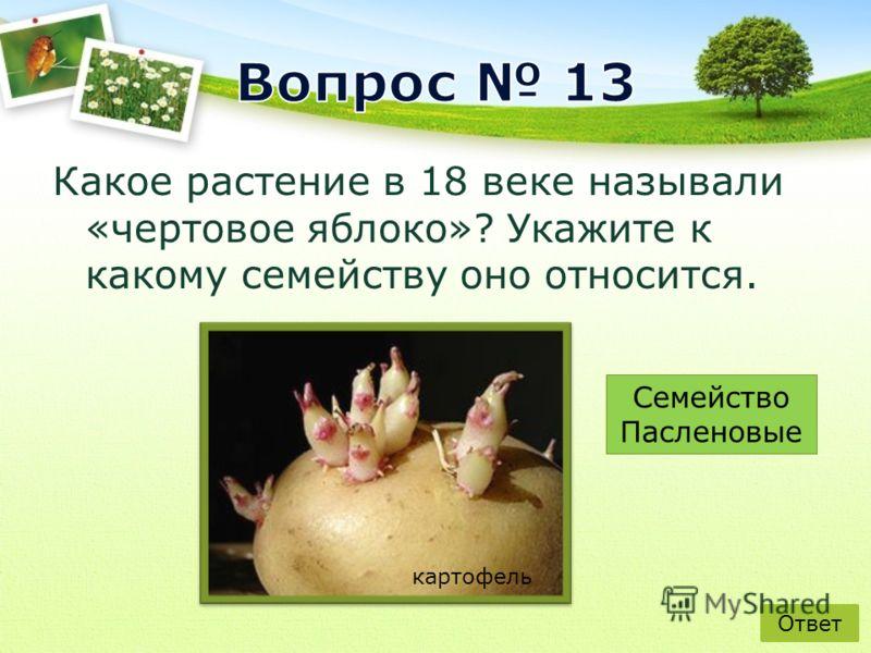 Какое растение в 18 веке называли «чертовое яблоко»? Укажите к какому семейству оно относится. Ответ картофель Семейство Пасленовые