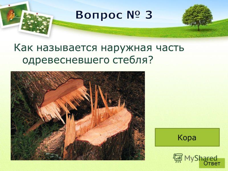 Как Как называется наружная часть одревесневшего стебля? Ответ Кора