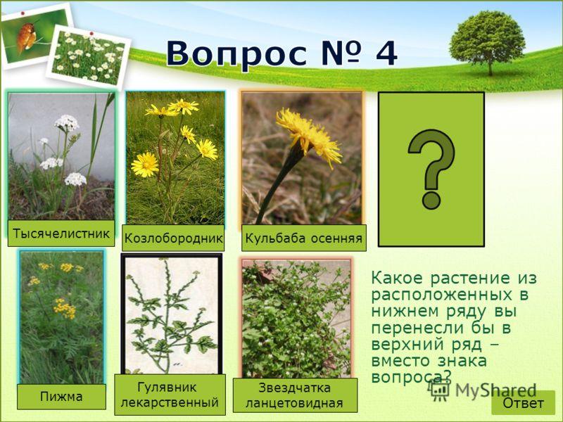 Какое растение из расположенных в нижнем ряду вы перенесли бы в верхний ряд – вместо знака вопроса? Тысячелистник КозлобородникКульбаба осенняя Гулявник лекарственный Звездчатка ланцетовидная Пижма Ответ