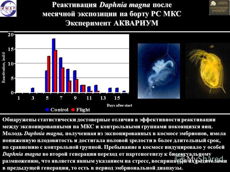 Reactivation, ind/d Days after start Обнаружены статистически достоверные отличия в эффективности реактивации между экспонированными на МКС и контрольными группами покоящихся яиц. Молодь Daphnia magna, полученная из экспонированных в космосе эмбрионо