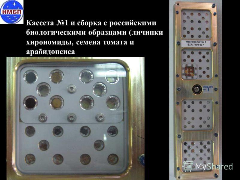 Кассета 1 и сборка с российскими биологическими образцами (личинки хирономиды, семена томата и арабидопсиса