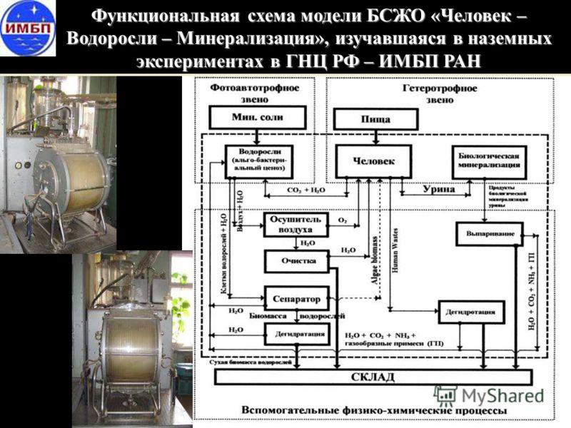 Функциональная схема модели БСЖО «Человек – Водоросли – Минерализация», изучавшаяся в наземных экспериментах в ГНЦ РФ – ИМБП РАН