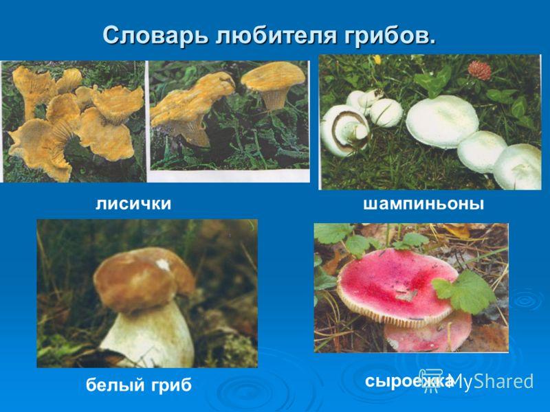 Словарь любителя грибов. лисичкишампиньоны белый гриб сыроежка