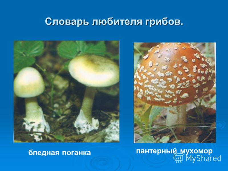 Словарь любителя грибов. бледная поганка пантерный мухомор