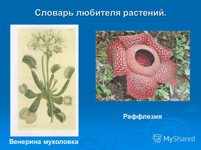 Словарь любителя растений. Венерина мухоловка Раффлезия