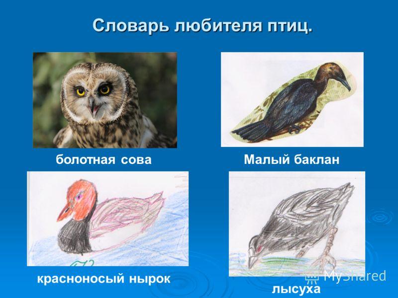 Словарь любителя птиц. Малый баклан лысуха красноносый нырок болотная сова