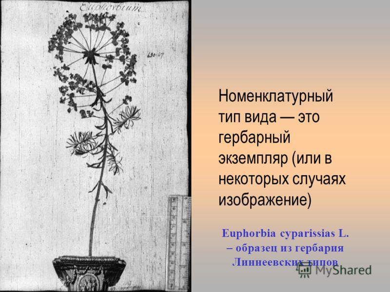 typus.jpg Номенклатурный тип вида это гербарный экземпляр (или в некоторых случаях изображение) Euphorbia cyparissias L. – образец из гербария Линнеевских типов