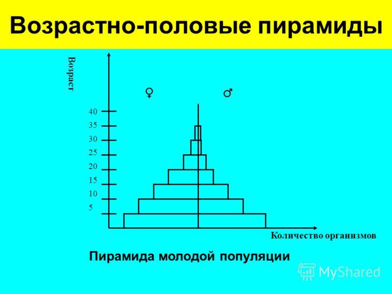 Возрастно-половые пирамиды 40 35 30 25 20 15 10 5 Количество организмов Возраст Пирамида молодой популяции