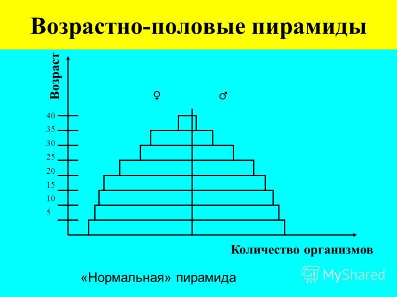 Возрастно-половые пирамиды 40 35 30 25 20 15 10 5 Количество организмов Возраст «Нормальная» пирамида
