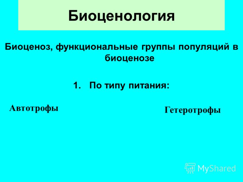 Биоценология Биоценоз, функциональные группы популяций в биоценозе 1.По типу питания: Автотрофы Гетеротрофы