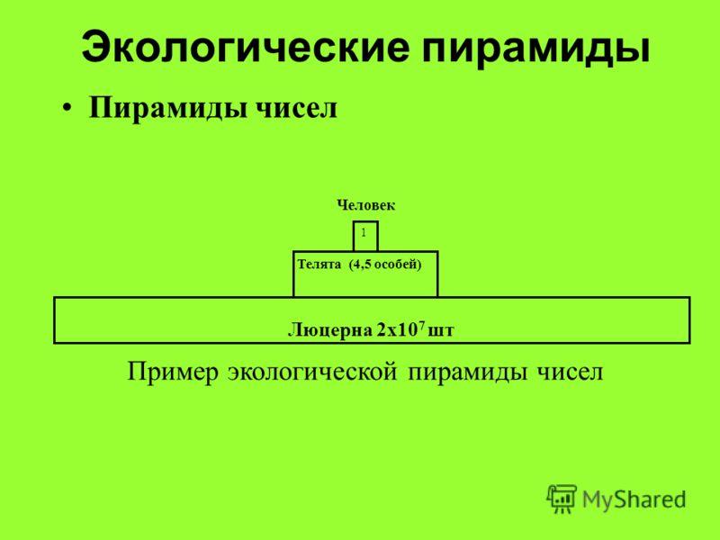 Экологические пирамиды Пирамиды чисел Люцерна 2х10 7 шт Телята (4,5 особей) 1 Человек Пример экологической пирамиды чисел