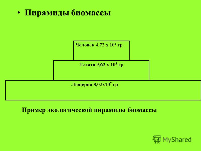 Пирамиды биомассы Люцерна 8,03х10 7 гр Телята 9,62 х 10 5 гр Человек 4,72 х 10 4 гр Пример экологической пирамиды биомассы