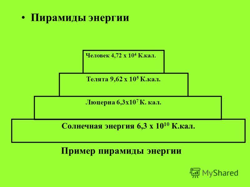Пирамиды энергии Люцерна 6,3х10 7 К. кал. Телята 9,62 х 10 5 К.кал. Человек 4,72 х 10 4 К.кал. Солнечная энергия 6,3 х 10 10 К.кал. Пример пирамиды энергии