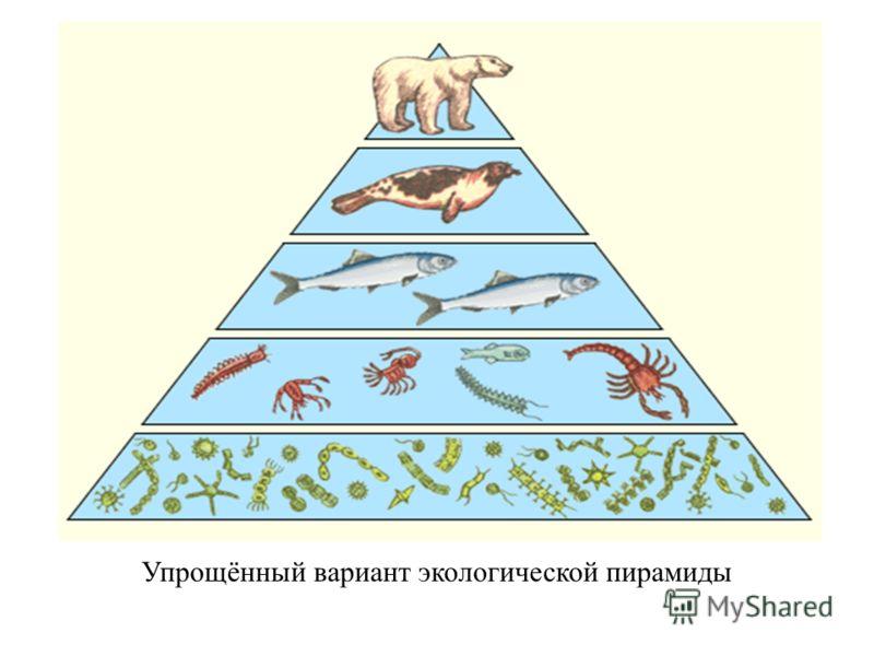 Упрощённый вариант экологической пирамиды