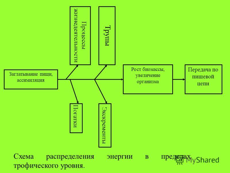 Заглатывание пищи, ассимиляция Процессы жизнедеятельности Погатки Трупы Экскременты Рост биомассы, увеличение организма Передача по пищевой цепи Схема распределения энергии в пределах трофического уровня.
