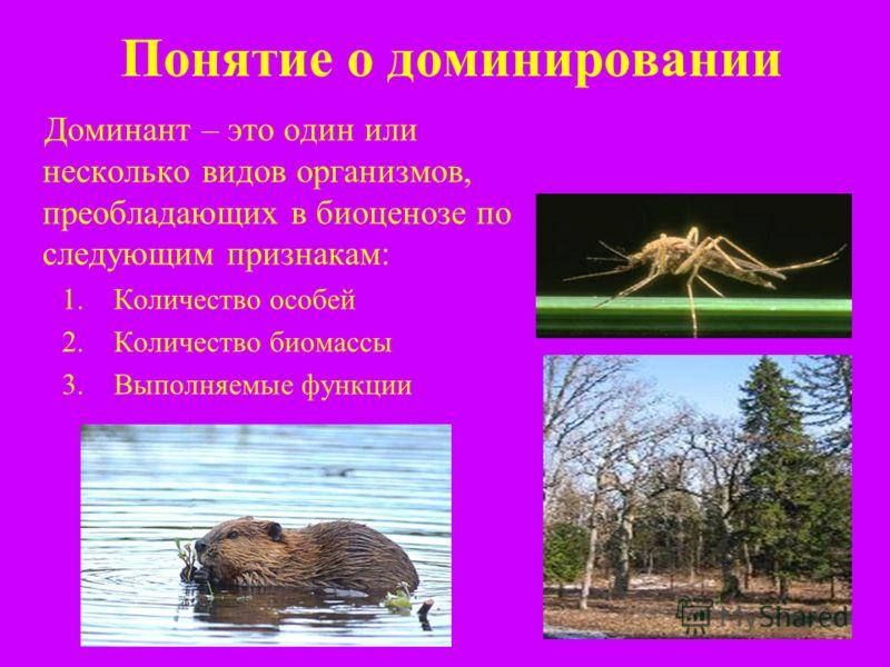 Понятие о доминировании Доминант – это один или несколько видов организмов, преобладающих в биоценозе по следующим признакам: 1.Количество особей 2.Количество биомассы 3.Выполняемые функции