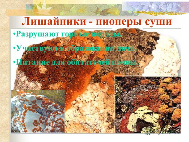 Роль лишайников в природе Корм для северных оленей(ягель). Защищают деревья от грибов – паразитов. Лишайники – индикаторы состояния окружающей среды.