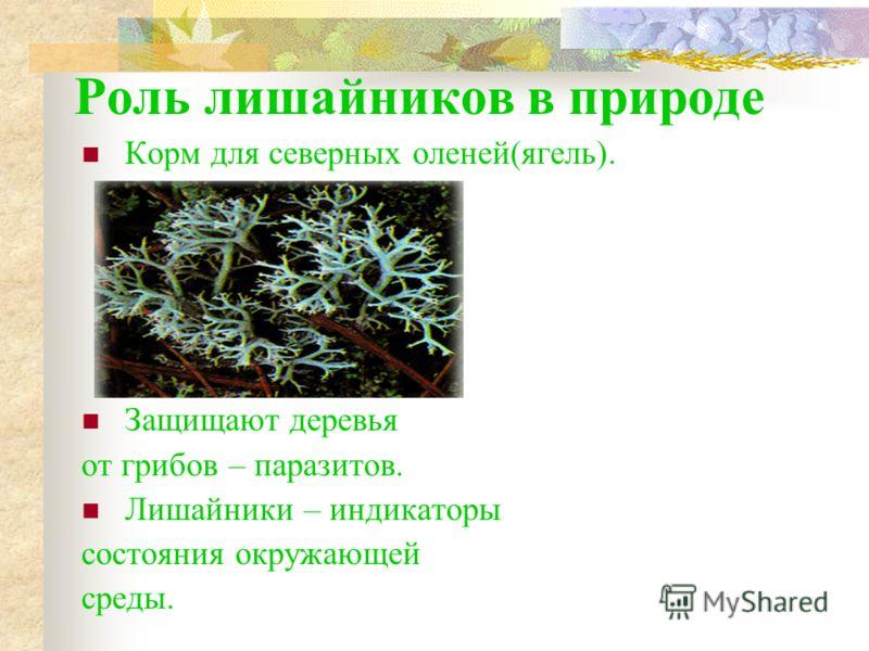 виды паразитов в кишечнике человека фото