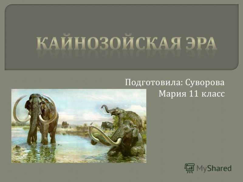 Подготовила : Суворова Мария 11 класс
