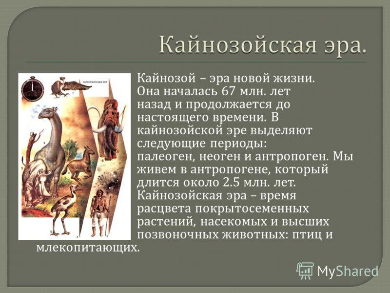 Кайнозой – эра новой жизни. Она началась 67 млн. лет назад и продолжается до настоящего времени. В кайнозойской эре выделяют следующие периоды : палеоген, неоген и антропоген. Мы живем в антропогене, который длится около 2.5 млн. лет. Кайнозойская эр