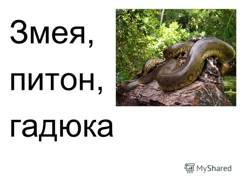 Змея, питон, гадюка