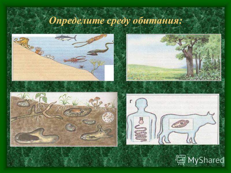 Среда обитания Среда обитания - часть природы, в которой живёт организм часть природы, в которой живёт организм. наземно - воздушная Почвенная Водная организм хозяина