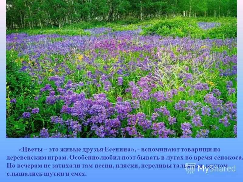 «Цветы – это живые друзья Есенина», - вспоминают товарищи по деревенским играм. Особенно любил поэт бывать в лугах во время сенокоса. По вечерам не затихали там песни, пляски, переливы тальянки, кругом слышались шутки и смех.