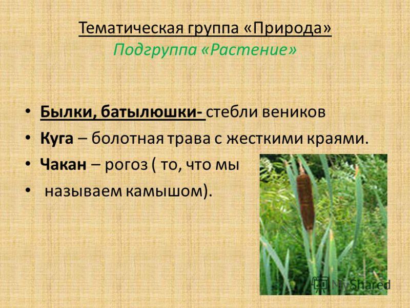 Тематическая группа «Природа» Подгруппа «Растение» Былки, батылюшки- стебли веников Куга – болотная трава с жесткими краями. Чакан – рогоз ( то, что мы называем камышом).