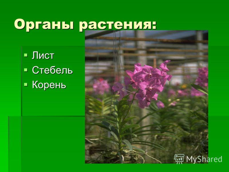 Органы растения: Лист Лист Стебель Стебель Корень Корень