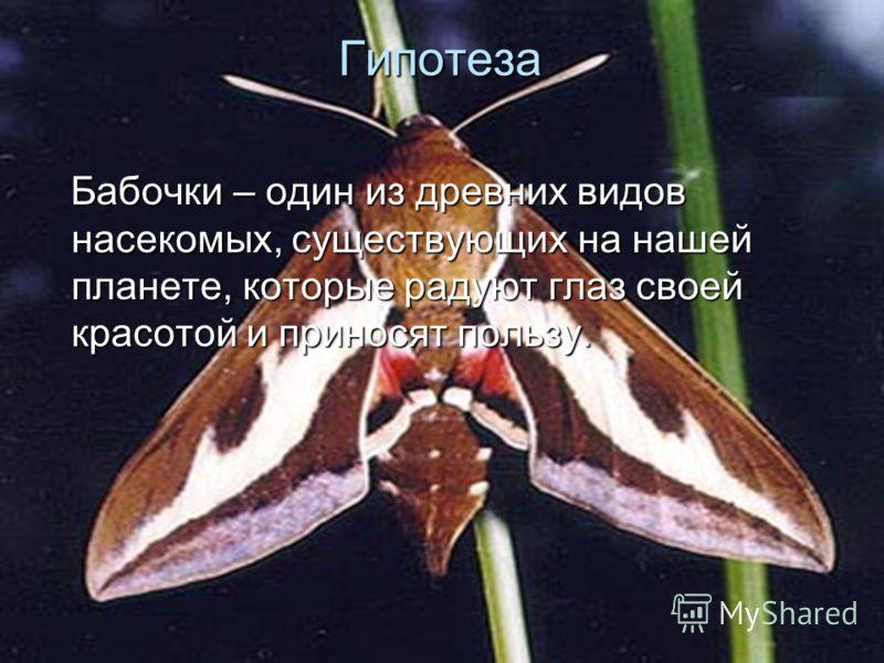 Гипотеза Бабочки – один из древних видов насекомых, существующих на нашей планете, которые радуют глаз своей красотой и приносят пользу. Бабочки – один из древних видов насекомых, существующих на нашей планете, которые радуют глаз своей красотой и пр