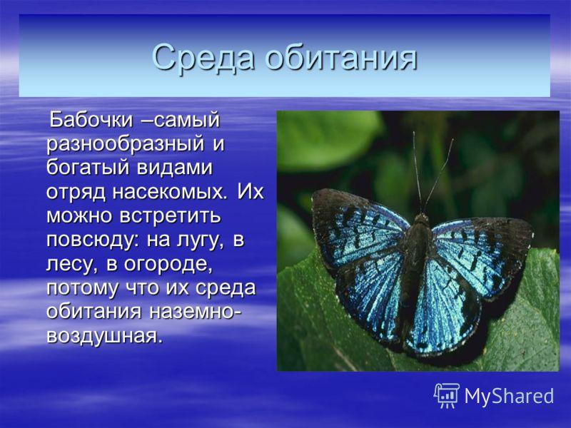 Среда обитания Бабочки –самый разнообразный и богатый видами отряд насекомых. Их можно встретить повсюду: на лугу, в лесу, в огороде, потому что их среда обитания наземно- воздушная. Бабочки –самый разнообразный и богатый видами отряд насекомых. Их м