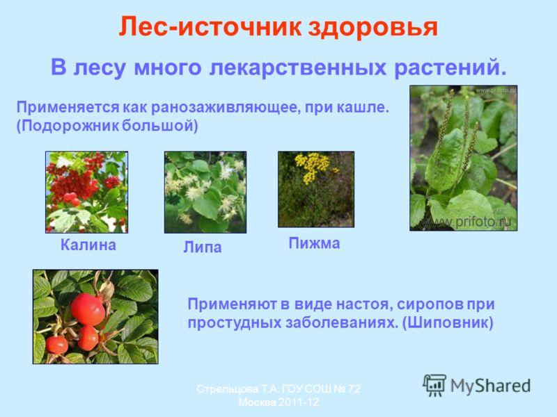 Лес-источник здоровья В лесу много лекарственных растений. Применяют в виде настоя, сиропов при простудных заболеваниях. (Шиповник) Применяется как ранозаживляющее, при кашле. (Подорожник большой) Калина Липа Пижма Стрельцова Т.А. ГОУ СОШ 72 Москва 2